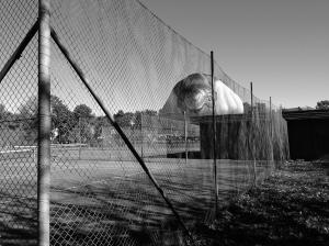 Skywhale Peeking over the fence