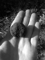 French Black Truffles 4
